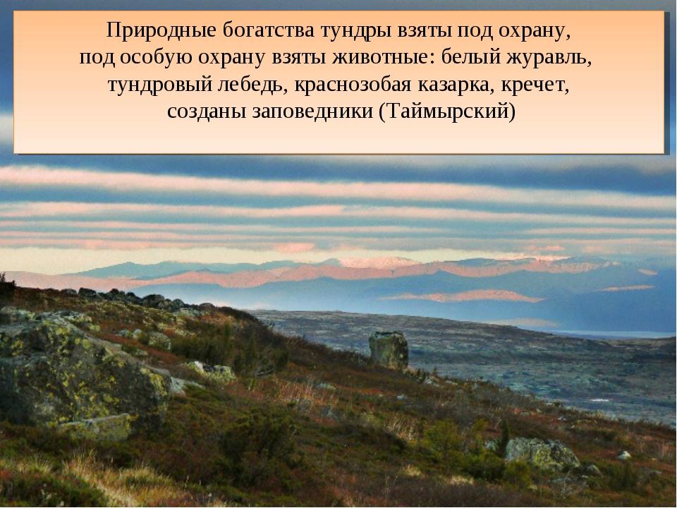 Природные богатства тундры взяты под охрану, под особую охрану взяты животные...