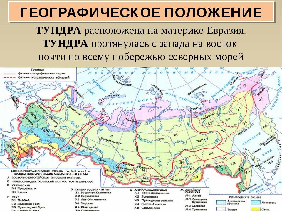 ТУНДРА расположена на материке Евразия. ТУНДРА протянулась с запада на восток...