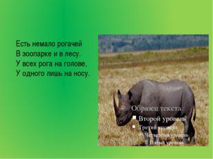 Есть немало рогачей В зоопарке и в лесу. У всех рога на голове, У одного лиш