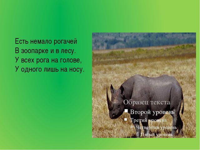 Есть немало рогачей В зоопарке и в лесу. У всех рога на голове, У одного лиш...
