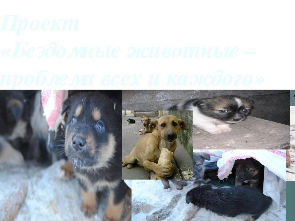 Проект «Бездомные животные – проблема всех и каждого»