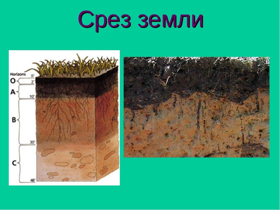 Картинка слоев почвы