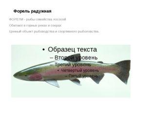 Форель радужная ФОРЕЛИ - рыбы семейства лососей Обитают в горных реках и озер