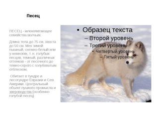 Песец ПЕСЕЦ - млекопитающее семейства волчьих. Длина тела до 75 см, хвоста до