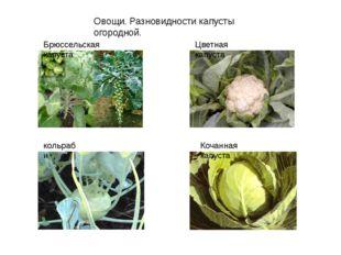 Овощи. Разновидности капусты огородной. Брюссельская капуста Цветная капуста