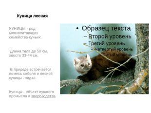 Куница лесная КУНИЦЫ - род млекопитающих семейства куньих. Длина тела до 50 с