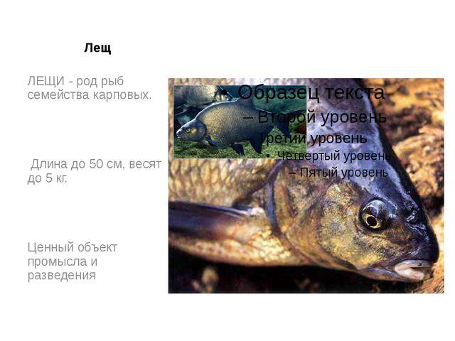 Лещ ЛЕЩИ - род рыб семейства карповых. Длина до 50 см, весят до 5 кг. Ценный...