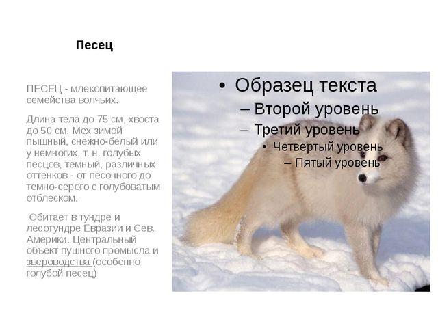 Песец ПЕСЕЦ - млекопитающее семейства волчьих. Длина тела до 75 см, хвоста до...