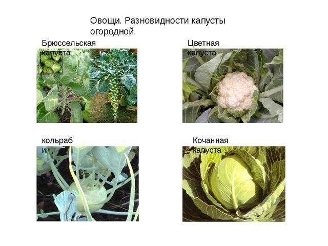 Овощи. Разновидности капусты огородной. Брюссельская капуста Цветная капуста...