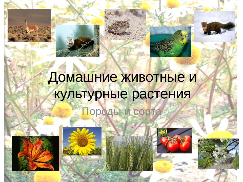 Домашние животные и культурные растения Породы и сорта