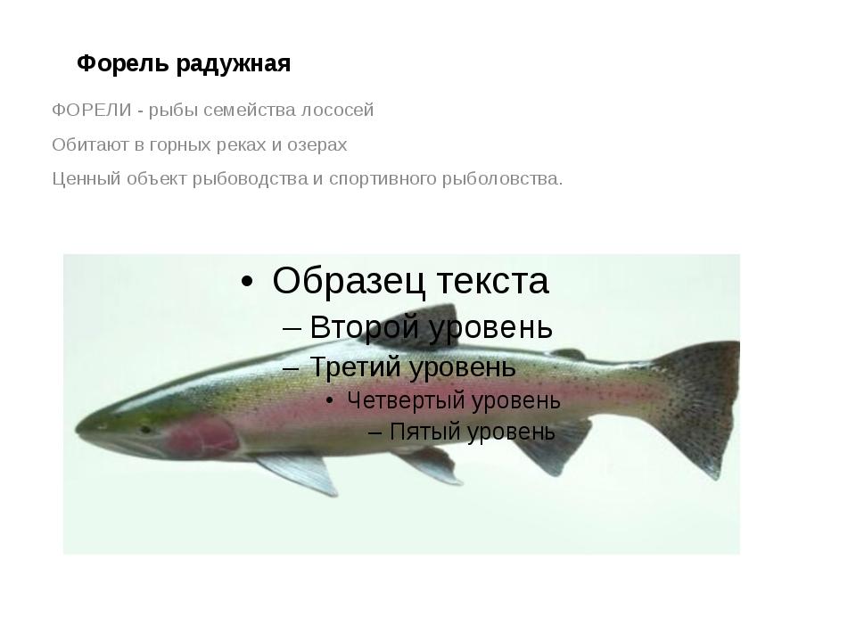 Форель радужная ФОРЕЛИ - рыбы семейства лососей Обитают в горных реках и озер...