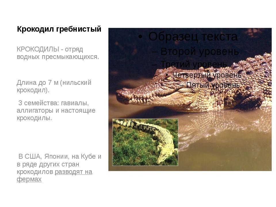 Крокодил гребнистый КРОКОДИЛЫ - отряд водных пресмыкающихся. Длина до 7 м (ни...