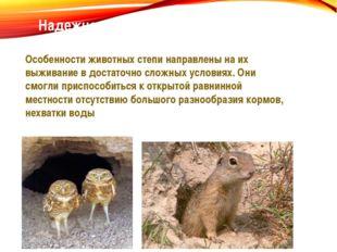 Надежное укрытие – способ выжить в степи Особенности животных степи направлен