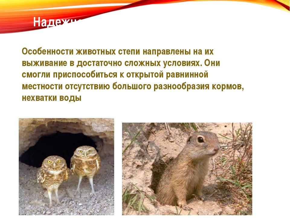 Надежное укрытие – способ выжить в степи Особенности животных степи направлен...