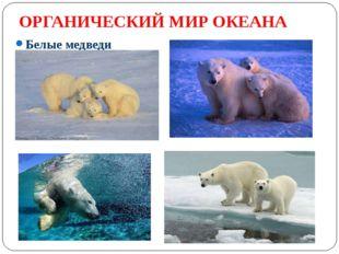 ОРГАНИЧЕСКИЙ МИР ОКЕАНА Белые медведи