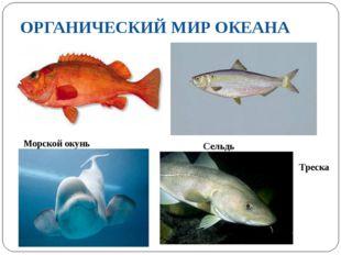 ОРГАНИЧЕСКИЙ МИР ОКЕАНА Морской окунь Треска Сельдь