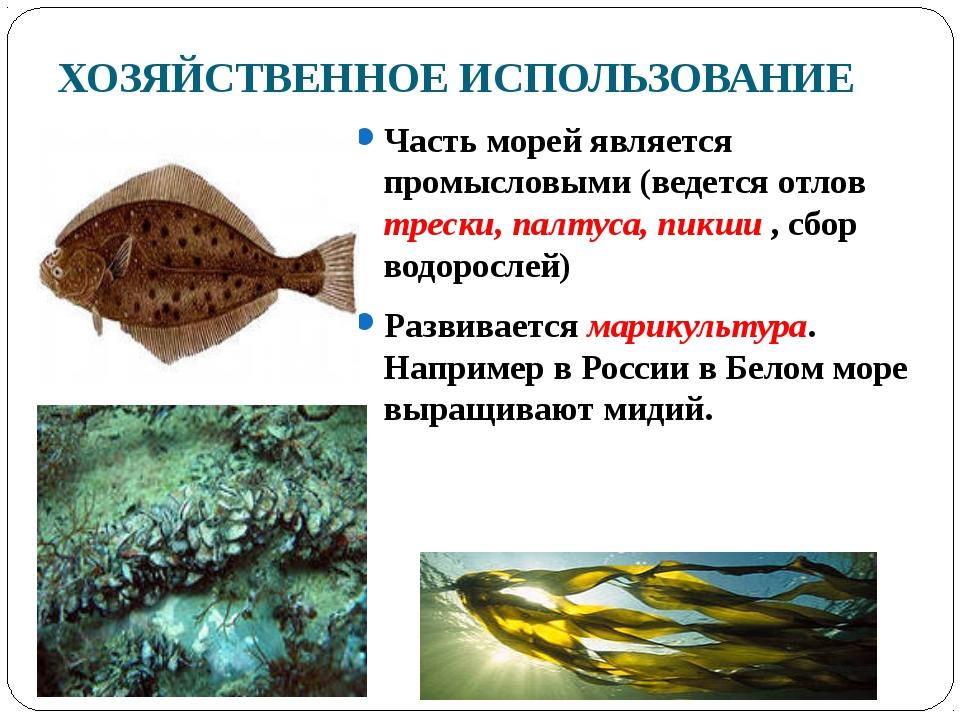 ХОЗЯЙСТВЕННОЕ ИСПОЛЬЗОВАНИЕ Часть морей является промысловыми (ведется отлов...