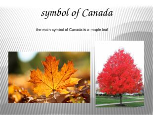 symbol of Canada the main symbol of Canada is a maple leaf