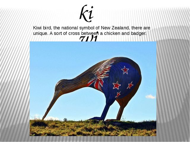 kiwi Kiwi bird, the national symbol of New Zealand, there are unique. A sort...
