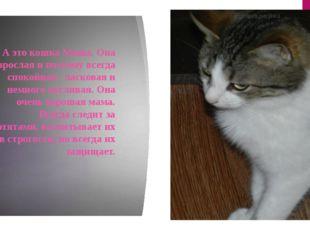 А это кошка Маша. Она взрослая и поэтому всегда спокойная , ласковая и немно