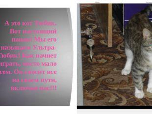 А это кот Тюбик. Вот настоящий пацан! Мы его называем Ультра-Тюбик! Как начн