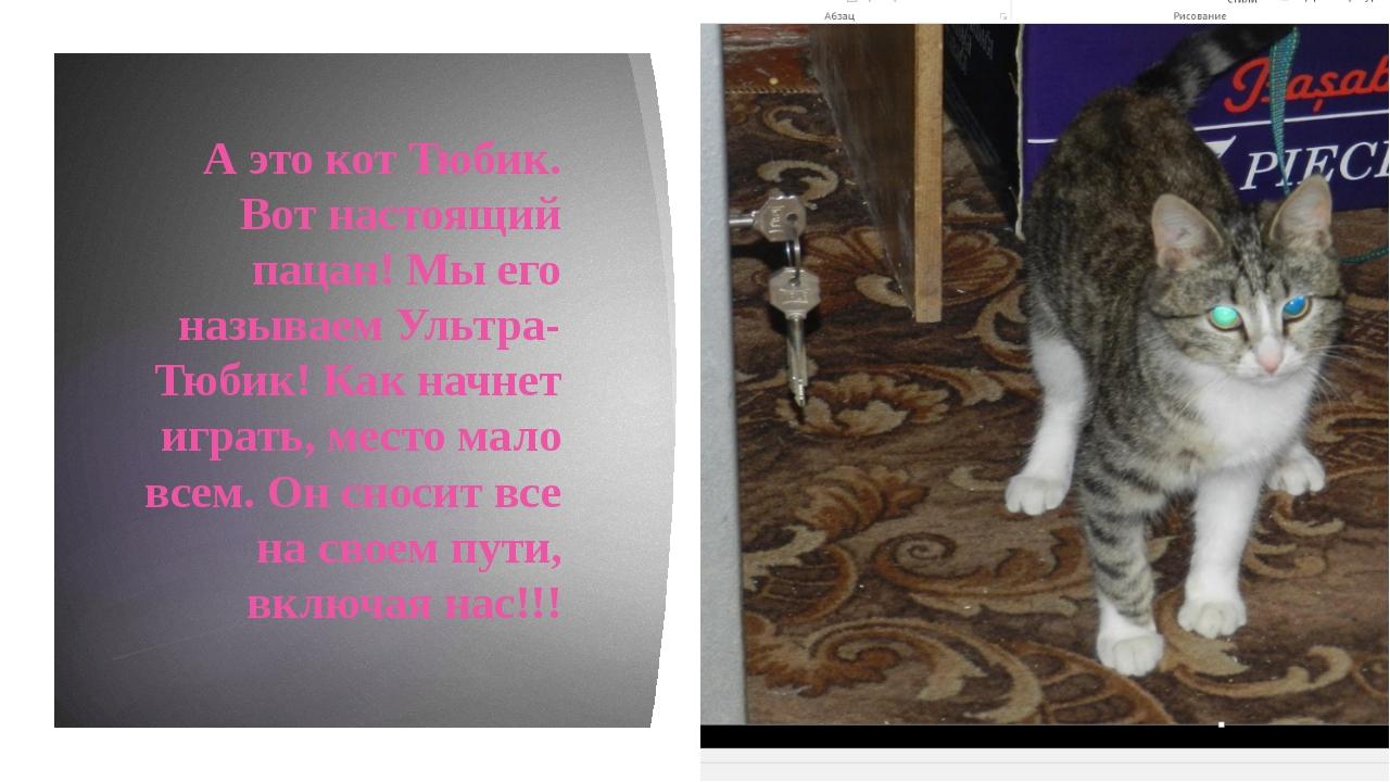 А это кот Тюбик. Вот настоящий пацан! Мы его называем Ультра-Тюбик! Как начн...