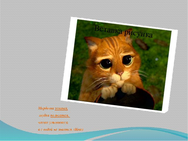 Мордочка усатая, шубка полосатая, часто умывается, а с водой не знается. (Кот)