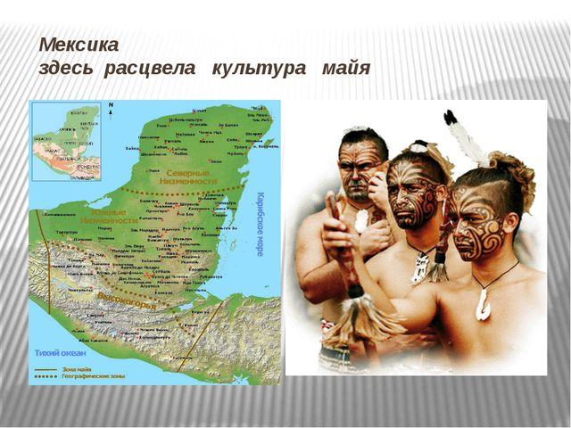Мексика здесь расцвела культура майя