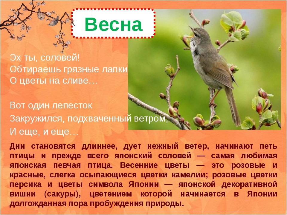 Дни становятся длиннее, дует нежный ветер, начинают петь птицы и прежде всего...