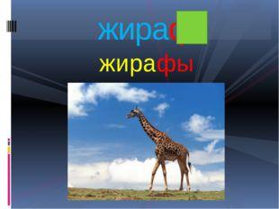 жирафы жираф