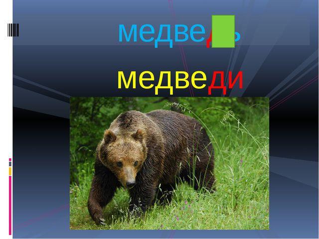 медведи медведь