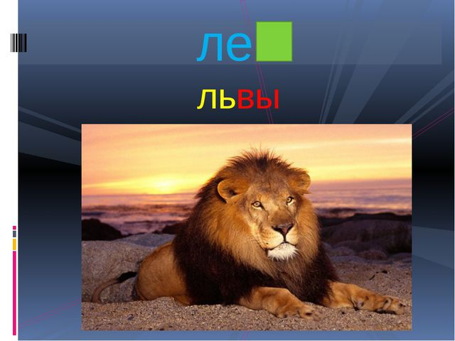 львы лев