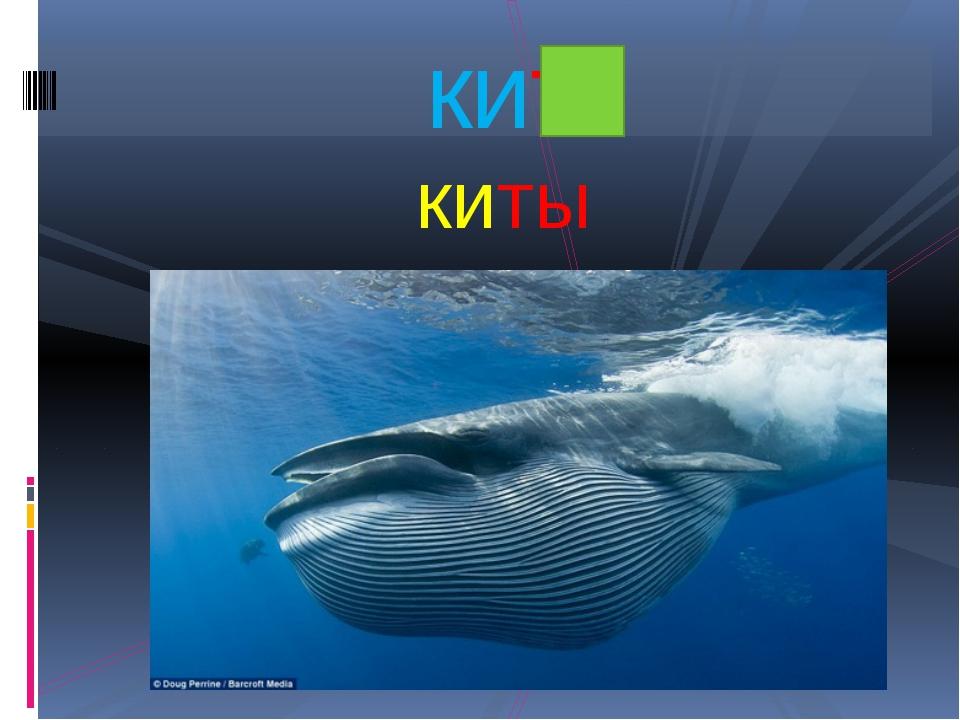 киты кит