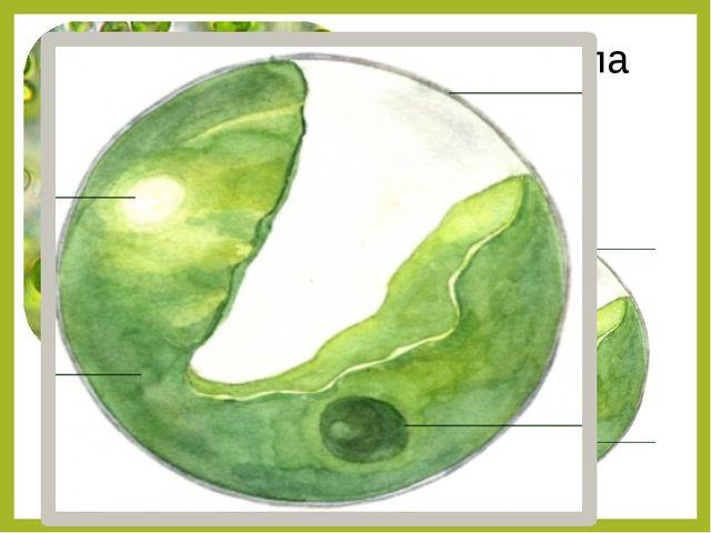 Обязательное: §19. По выбору: - сообщение о необычных одноклеточных организма...