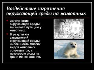 Воздействие загрязнения окружающей среды на животных Загрязнение окружающей с