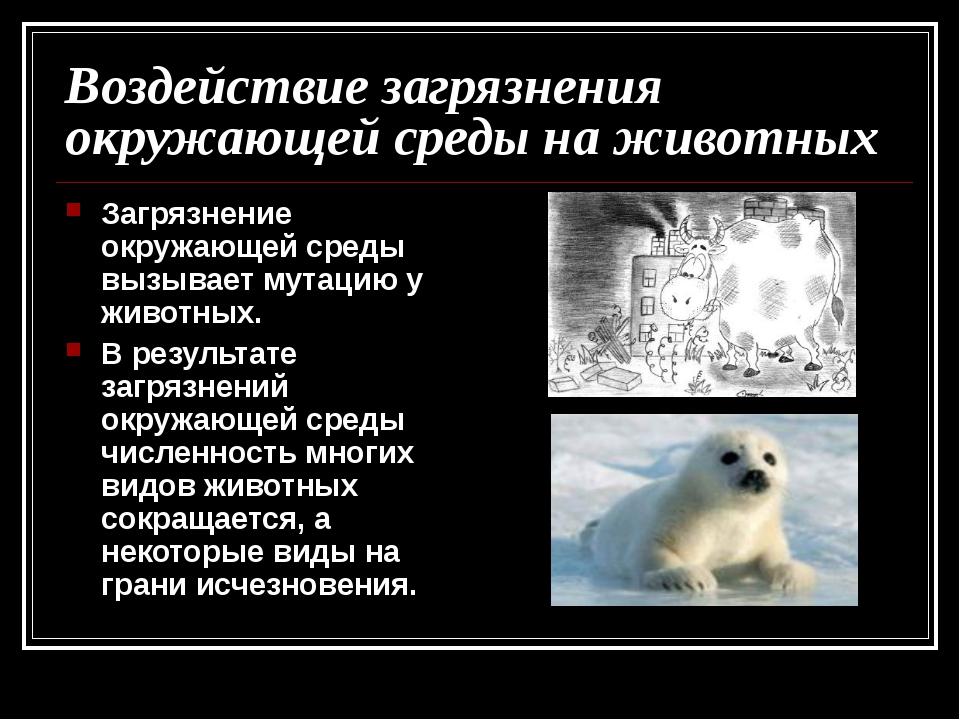 Воздействие загрязнения окружающей среды на животных Загрязнение окружающей с...