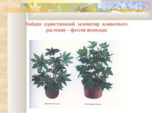 Найден единственный экземпляр комнатного растения – фатсия японская.