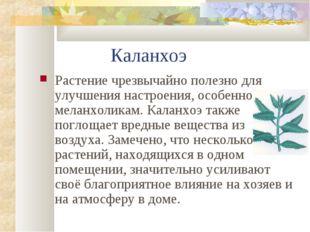 Каланхоэ Растение чрезвычайно полезно для улучшения настроения, особенно мел