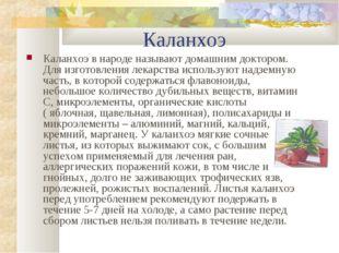 Каланхоэ Каланхоэ в народе называют домашним доктором. Для изготовления лека