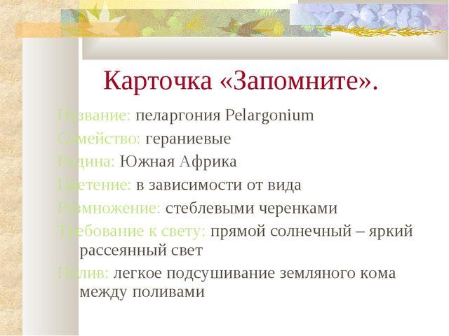 Карточка «Запомните». Название: пеларгония Pelargonium Семейство: гераниевые...