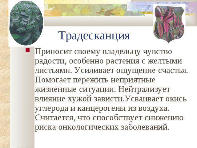 Традесканция Приносит своему владельцу чувство радости, особенно растения с...