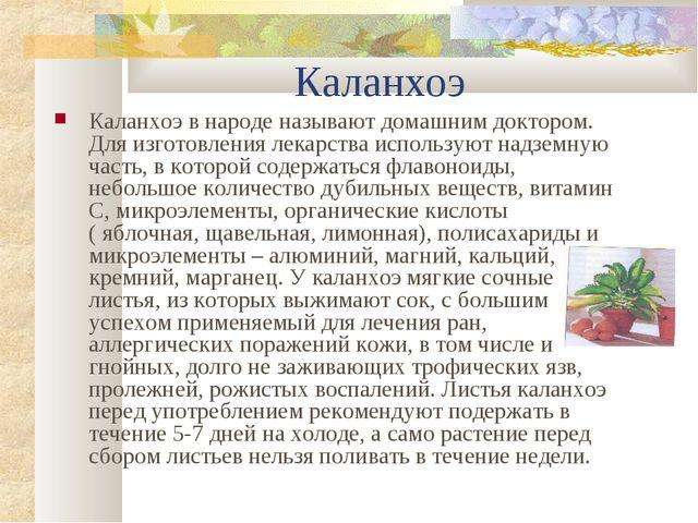 Каланхоэ Каланхоэ в народе называют домашним доктором. Для изготовления лека...