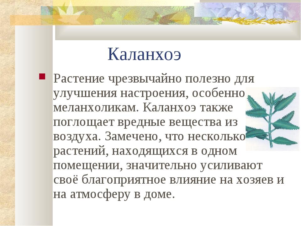 Каланхоэ Растение чрезвычайно полезно для улучшения настроения, особенно мел...