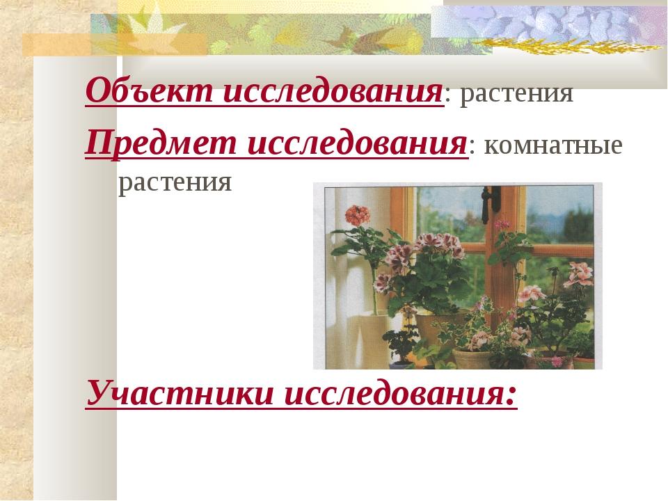 Объект исследования: растения Предмет исследования: комнатные растения Участн...