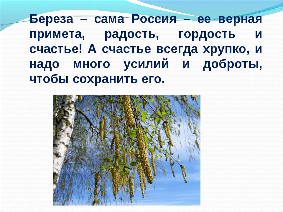 Береза – сама Россия – ее верная примета, радость, гордость и счастье! А счас...