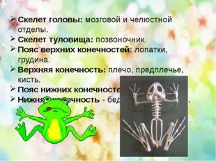Скелет головы: мозговой и челюстной отделы. Скелет туловища: позвоночник. Поя