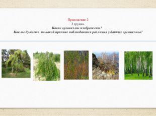 Приложение 2 3 группа. Какие организмы изображены? Как вы думаете по какой пр