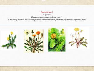 Приложение 2 4 группа. Какие организмы изображены? Как вы думаете по какой пр