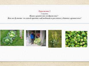 Приложение 2 2 группа. Какие организмы изображены? Как вы думаете по какой пр