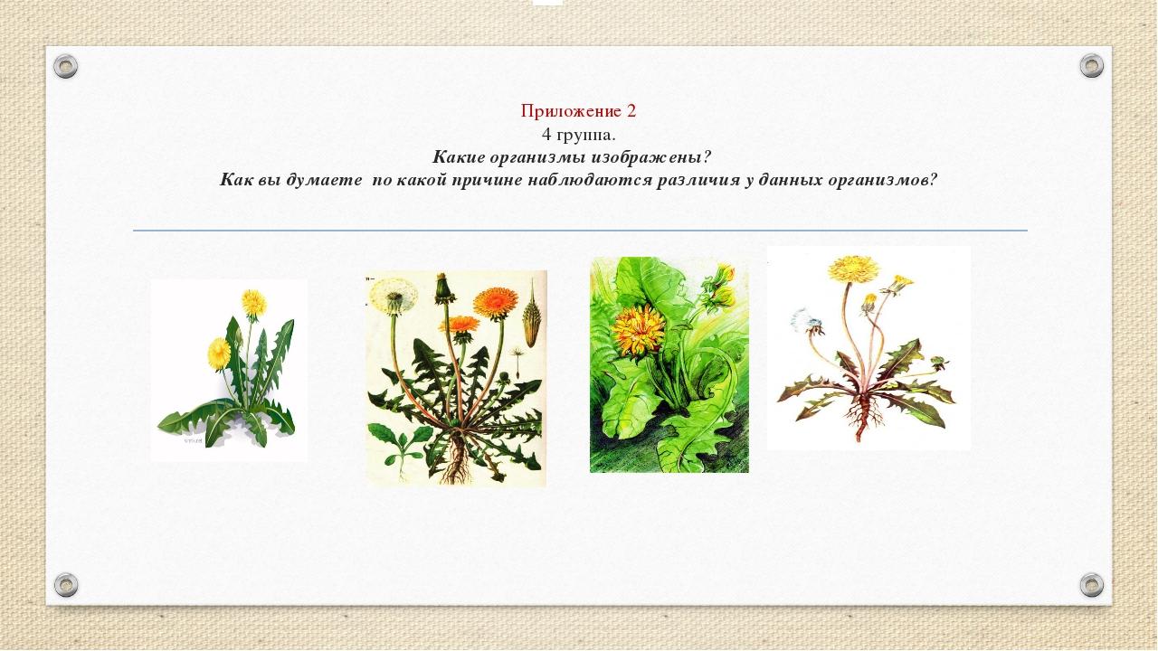 Приложение 2 4 группа. Какие организмы изображены? Как вы думаете по какой пр...